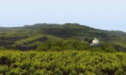 gambellara landscape